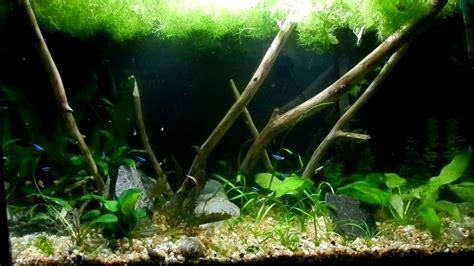 biotope aquascape 29 gallon new aquascape july 7th 2012 freshwater
