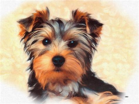 yorkies lifespan canada goose lifespan yorkie