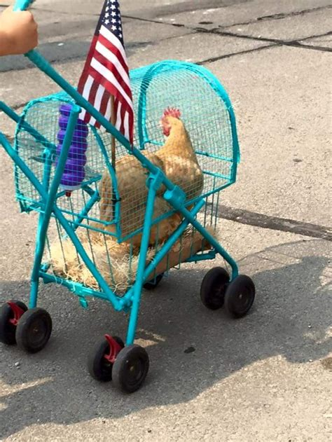 Pet stroller perfect for dogs cats rabbits even for chickens