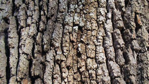Rinde Der Eiche by Kostenlose Foto Baum Natur Ast Holz Textur Blatt