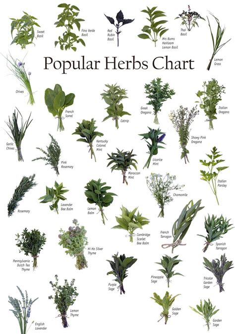 herbal academy using flavorful culinary herbs herbal identifying herbs powers of natural herbs health and