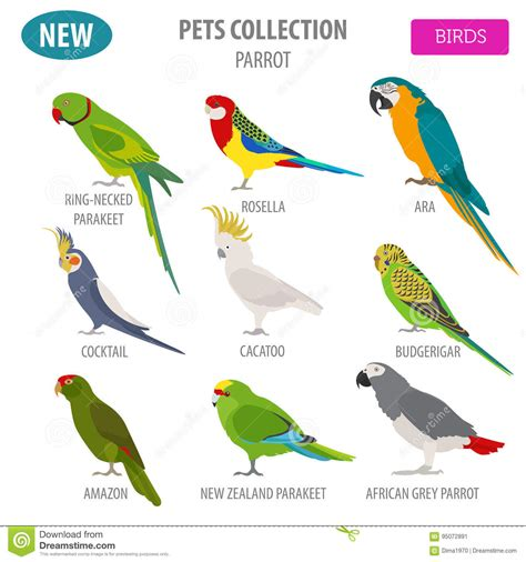 bird breeds parrot breeds icon set flat style isolated on white pet birds c stock vector