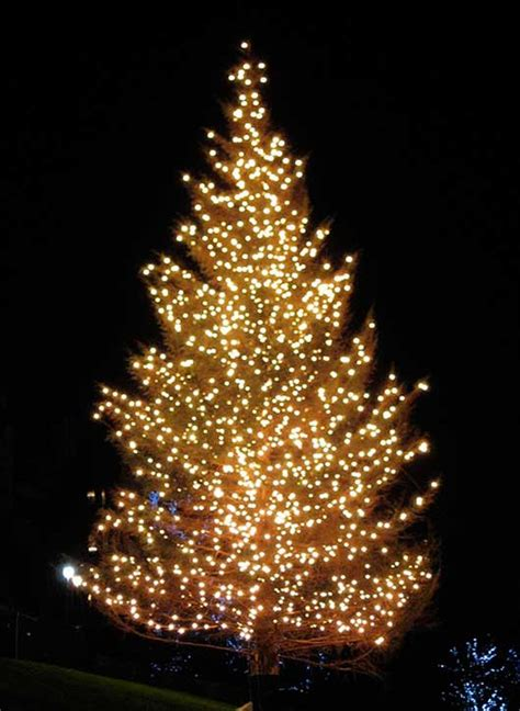 tree of lights 40 pictures of in still photography
