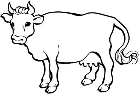 preschool cow coloring page cow coloring pages preschool in fancy cow coloring pages