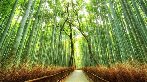 Japan 3d Nature Hd Nature by Japan Nature Wallpaper 183