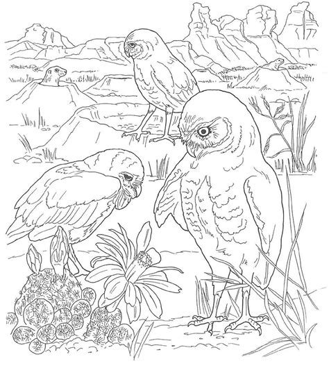 Free Coloring Pages Of Dessert Desert Animals Coloring Pages