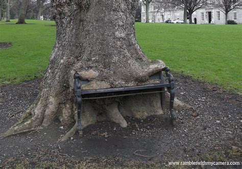 eating bench look at this tree eating a park bench its mad youtube