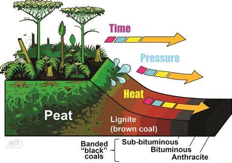 diagram of coal coal kentucky geological survey of kentucky