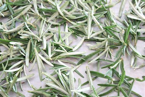 how to preserve fresh herbs i adore food
