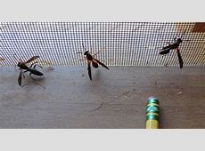 Monday macrobugs: Wasp trio - Mountain Beltway - AGU ... What Day Of The Week Was October 8 2012