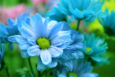 wallpaper flower nature hd flowers beauty blue nature hd wallpapers new hd wallpapers