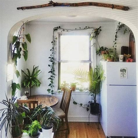 indoor plant options for apartments cozy bliss best 25 cozy apartment decor ideas on pinterest