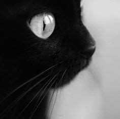 White Colorless Cat Eye photograph enzo s by alfred schneider on 500px cat