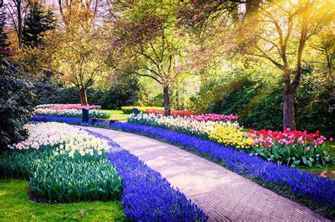 foto di fiori colorati paesaggio di primavera con fiori colorati foto stock