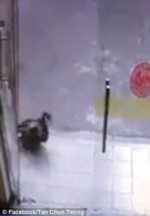 Cat Hits Glass Door Crashes Into Glass Door On While Chasing A Cat