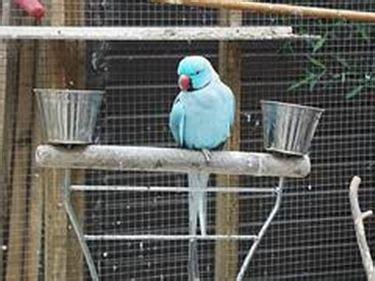 come costruire una gabbia per pappagalli voliera pappagalli pappagalli