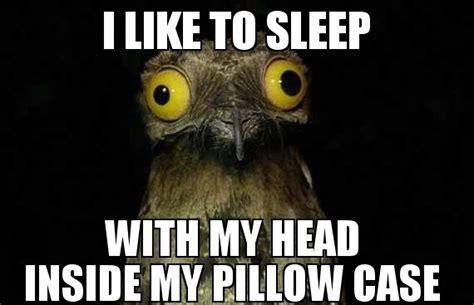 Potoo Bird Meme - introducing weird stuff i do potoo meme guy