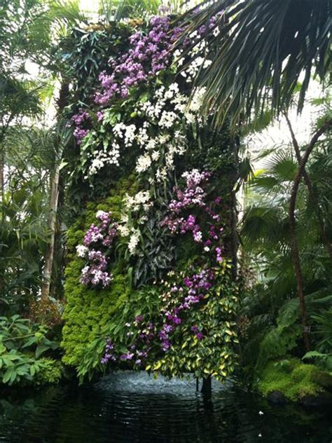 nyc botanical garden the orchid and green wall show