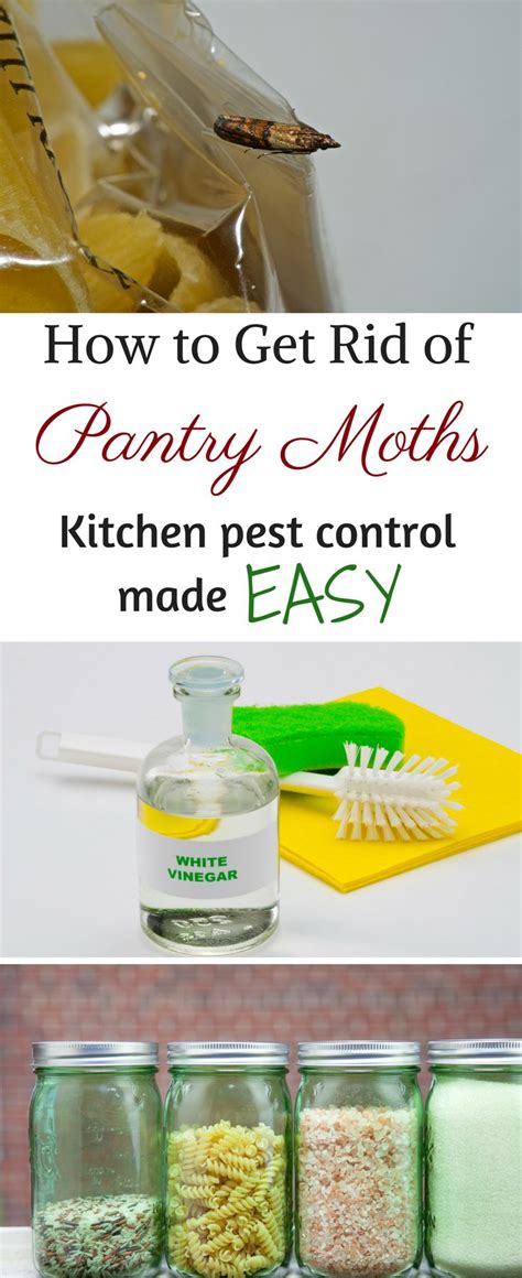 How To Get Rid Of Pantry Pests by 1000 Images About Cleaning Tips And Tricks On