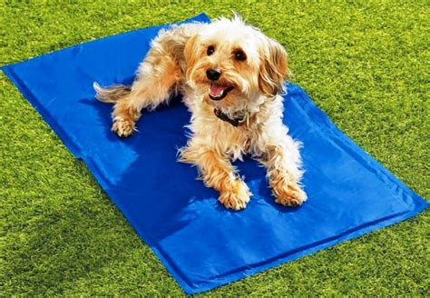 cooling pad for dogs what helps with shedding say quot no quot to your golden golden retriever rescue