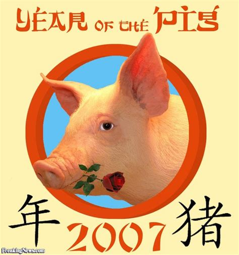 Golden Year Of The Pig 2007 by Pig With A In His Pictures Freaking News