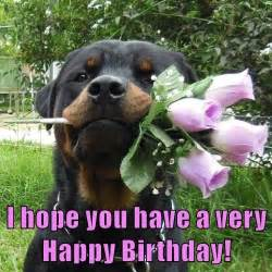 rottweiler birthday wishes 410 best images about bb day on happy birthday beautiful happy birthday