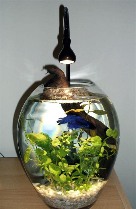 Small Heater For Betta Fish Bowl 17 Best Ideas About Betta Fish Bowl On Pet