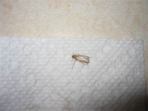 flying bugs in bedroom small flying bugs in bedroom memsaheb net
