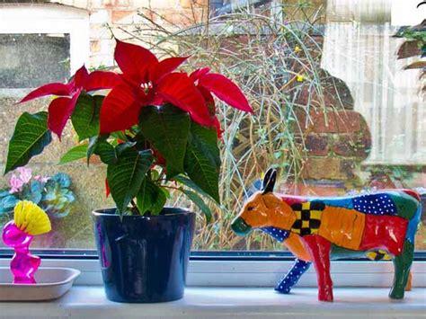 14 eco friendly christmas decorating ideas for interior