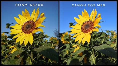 review kamera canon eos   sony  ternyata bagus