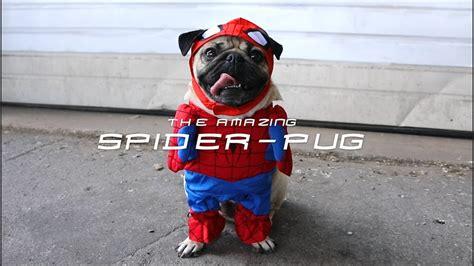 spider pug spider pug doug the pug