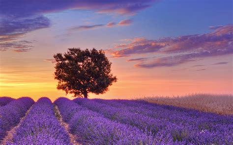 purple flower wallpaper hd pixelstalknet