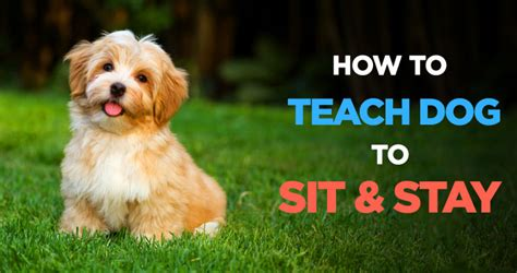 how to teach a puppy to sit behavior peanutpaws