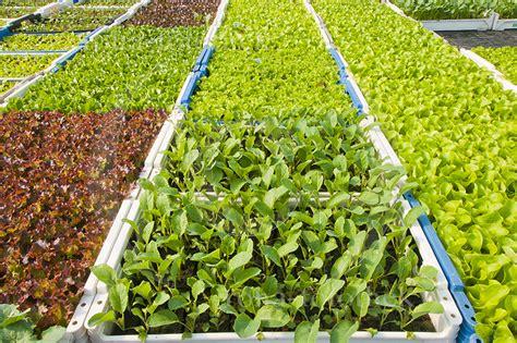 Gartenkräuter Pflanzen by Gemuese Garten Kraeuter