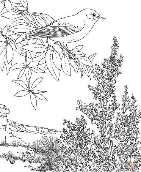 free coloring pages on bluebirds nevada mountain bluebird and sagebrush coloring page