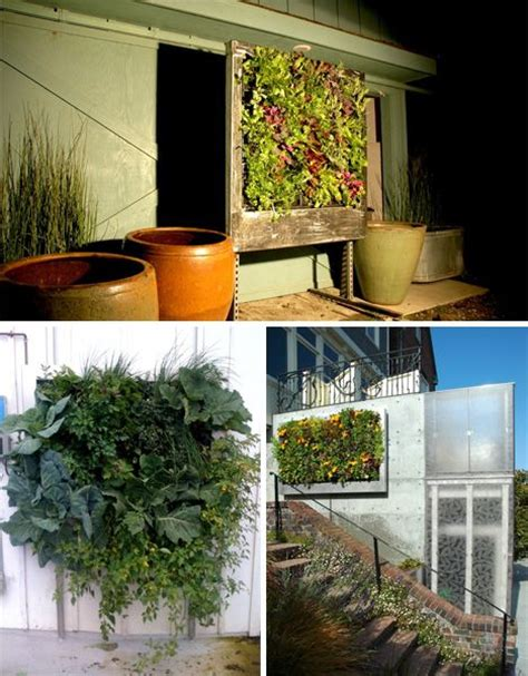 indoor hydroponic wall garden 10 images about hydroponics on pinterest gardens