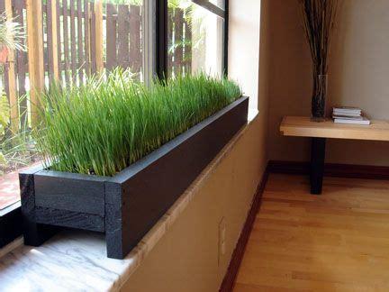 windowsill planter  grass   cat home decor