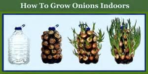 Indoor Vegetable Gardening For Beginners - home vegetable gardening for beginners ace gardener