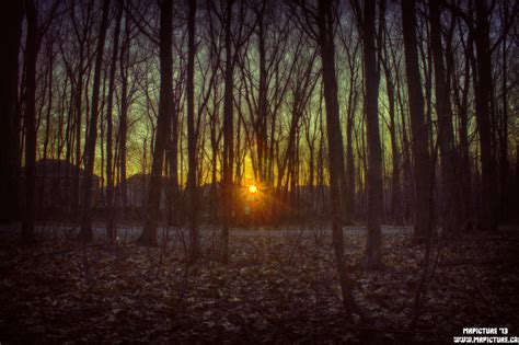 woods sunset wallpaper dark woods at sunset hdr www mrpicture ca by