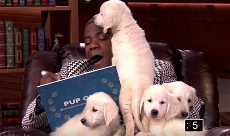jimmy fallon tracy jimmy fallon and tracy play quot pup quiz quot and we can