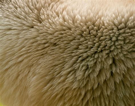 hairby minklittle polar bear fur pattern pictures free textures and free