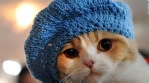watching cute cat   instinctual  good   cnn
