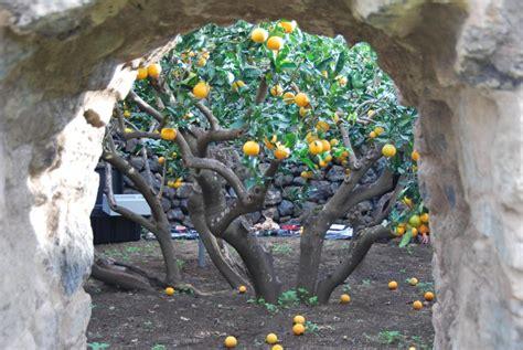 giardini siciliani giardini panteschi