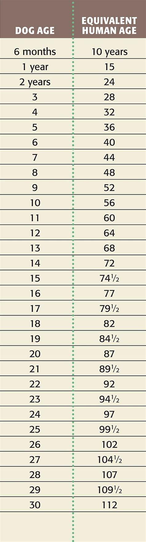 calculator age best 25 dog age chart ideas on pinterest kitten age