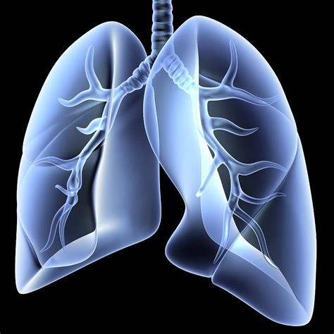 blogger lung video what is copd burke rehabilitation hospital