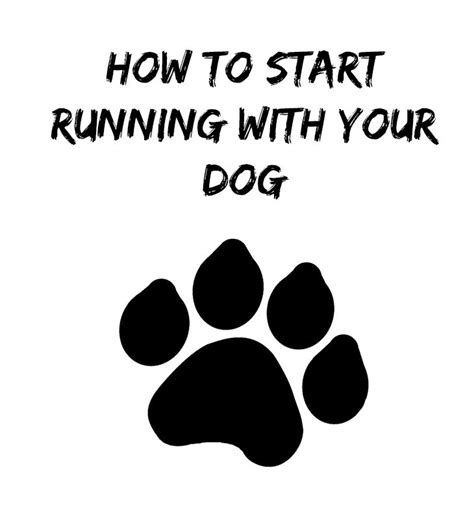 when to start your puppy how to start running with your thirty something runner