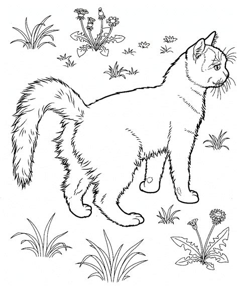 coloring pages of colored cats free printable cat coloring pages for kids