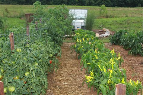 raised rows vegetable garden 4 easy steps to prepare the garden this fall for next year