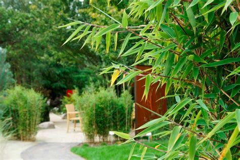 Pflanzen Garten Ohne Pflege by Bambus F 252 R Hecken Ohne Ausl 228 Ufer Bambuswald Bambus