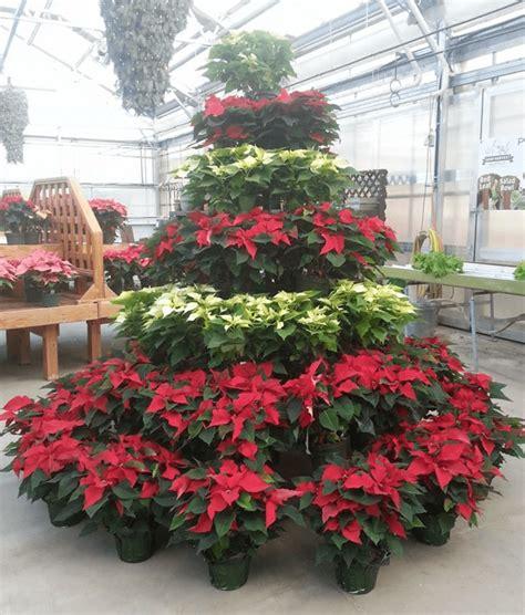 100 christmas tree hill lancaster pa fall 2016